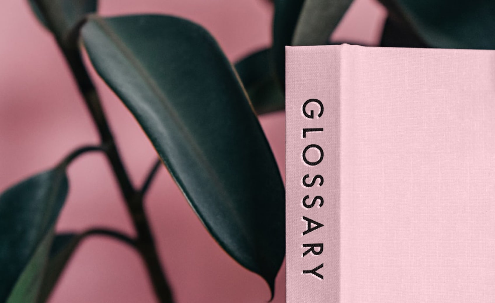 The Beauty Pie Glossary